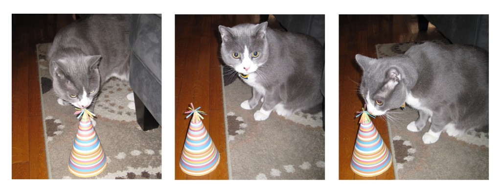 Hades checking out his party hat, which I made from a template I found online at www.mrprintables.com